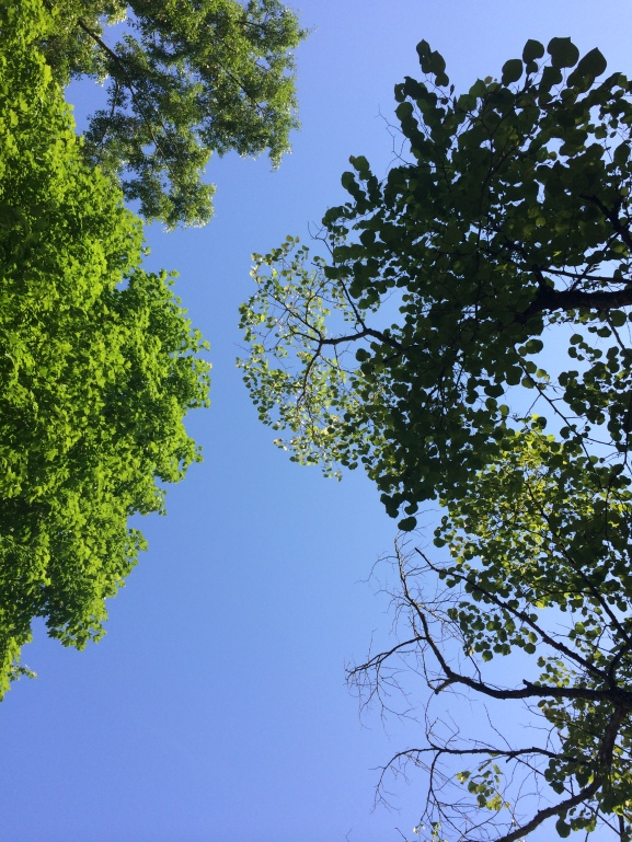 blue blue sky, green green trees